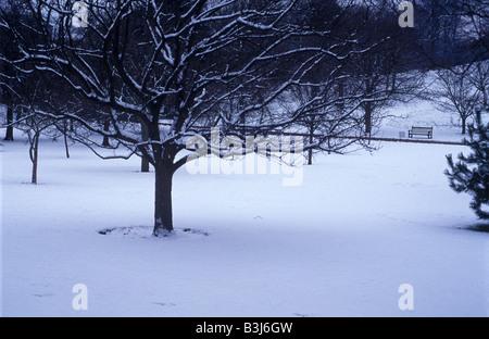 pristine snow in Edinburgh botanic gardens - Stock Photo