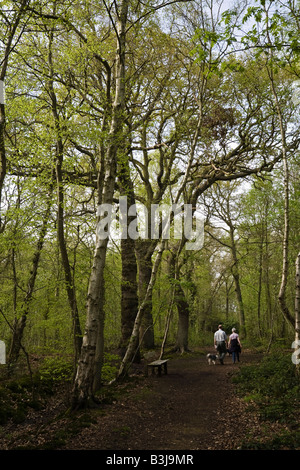 Couple walking in The Pinewoods (Woodland Trust), Woodhall Spa, Lincolnshire, England - Stock Photo