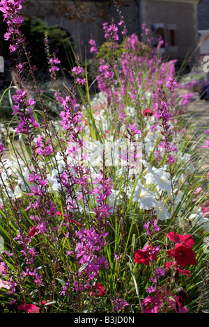 MUNICIPAL AMENITY PLANTINGS AT CHAUMONT LOIR ET CHER 41 USING GAURA LINDHEIMERI PETUNIA AND LYTHRUM VIRGATUM - Stock Photo