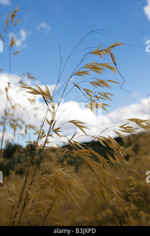 Wild Grass - Stock Photo