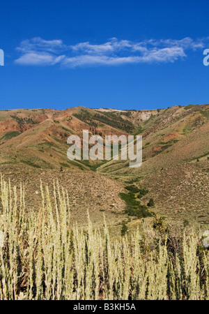 View of Sawmill Ridge in Humboldt Toiyabe National Forest near Honeymoon Flat campground. Twin Lakes, Bridgeport, - Stock Photo