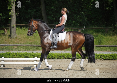 Oldenburg Horse with horsewoman - rein-back - Stock Photo