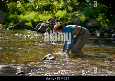 Local resident fly fishes for trout catches and releases a rainbow on Gore Creek Vail Colorado in August - Stock Photo