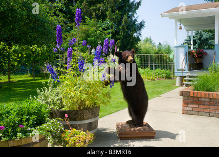 A stuffed cinnamon colored black bear trophy Ursus americanus stands in a residential backyard - Stock Photo