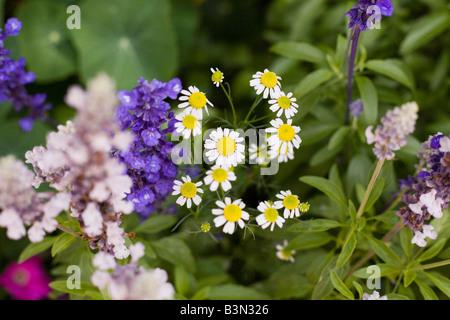 Epcot Flower and Garden Show Epcot Center Walt Disney World Orlando Florida plants flowers - Stock Photo