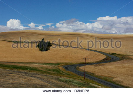 A gravel road cuts through the rolling wheat fields of the Palouse. North of Moscow, Idaho. - Stock Photo
