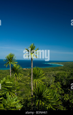 coast in Indonesia with a blue sky, coast in Indonesia with palm tree and blue sky at shiny day - Stock Photo