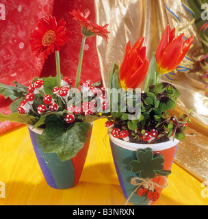 two flowerpots with Gerbera and tulips - Stock Photo