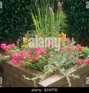 wooden tub with different flowers and plants - Stock Photo