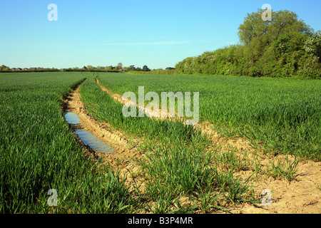 Kentish field in early summer with tractor tracks, Brabourne Lees, Ashford, Kent, England, Europe - Stock Photo