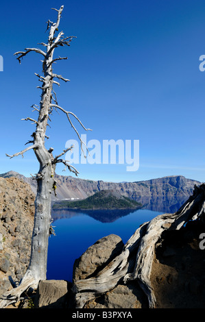 Dead trees stand on the rim of the Crater Lake. The Crater Lake National Park, Oregon, USA. - Stock Photo
