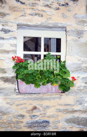 Small window with window box containing geraniums with red flowers, L'Isle, St Cast le Guildo, Cotes d'Amour, Britanny, - Stock Photo