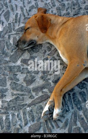 A stray dog sleeps on the pavement in Fira Santorini - Stock Photo