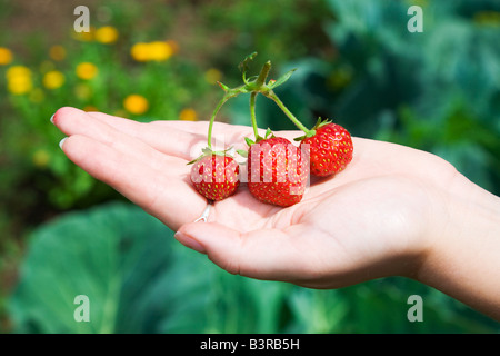 Strawberry at the girl palm - Stock Photo