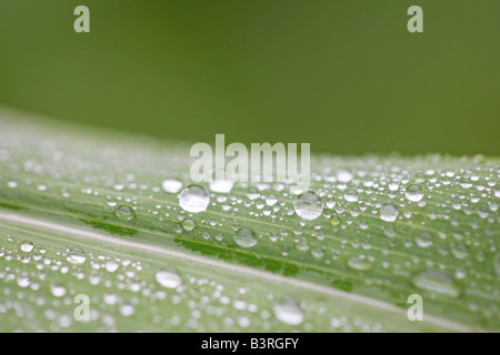 close up of water drops on leaf surface - Stock Photo