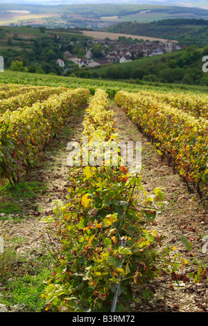 Vineyard at Irancy in the Yonne, Burgundy, France - Stock Photo