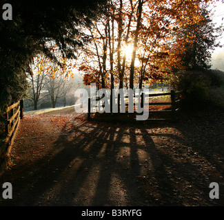 Sun rising behind autumnal trees and casting shadows over a driveway - Stock Photo