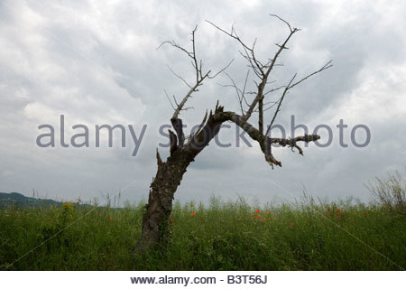 dead tree in spring green grass against a gray sky - Stock Photo