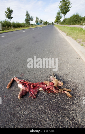 remains of a roadkill - Stock Photo