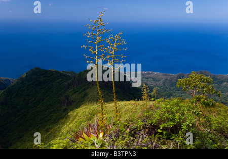 MARTINIQUE. French Antilles. West Indies. Flower stalks of agave grow on steep ridge high on Mt PelÈe. Caribbean - Stock Photo