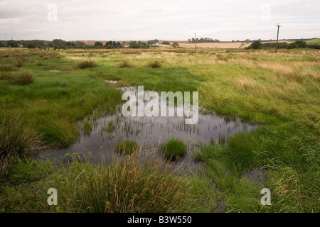 A waterlogged field close to Alnmouth in Northumberland, after the severe flooding experienced in the summer of - Stock Photo
