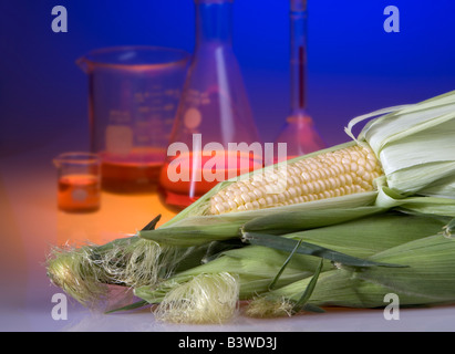 Concept shot of genetically modified corn showing beakers and flasks. Genetically modified foods are resistant to - Stock Photo