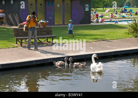 Man taking pictures of swans and signets Coe Fen Cambridge Great Britain UK - Stock Photo