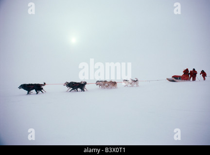 Dogsleds and mushers in blizzard conditions training for the 1986 Steger International Polar Expedition - Stock Photo