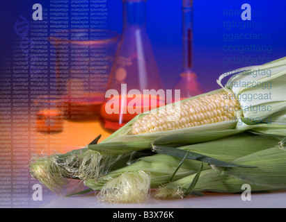 Concept shot of genetically modified corn showing beakers and DNA sequence codes and a helix. - Stock Photo