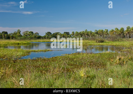 Small lake by the Transpantaneira Road in the Pantanal Mato Grosso do Sul Brazil - Stock Photo