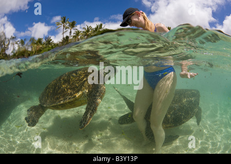 Green Turtles and Tourist Chelonia mydas Oahu Pacific Ocean Hawaii USA - Stock Photo