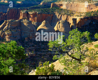 COLORADO NATIONAL MONUMENT, COLORADO. USA. Pinyon pines above rock formations called the Coke Ovens. Monument Canyon. - Stock Photo