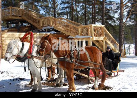 Riding in a troika Russian horse drawn sleigh near Listvyanka on Lake Baikal in Siberia Russia - Stock Photo