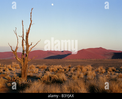 Namibia, Namib Desert, Sesriem. Full moon over the dunes at Sesriem in the Namib-Naukluft Park. Patterned by, and - Stock Photo