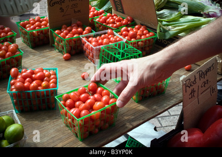 Man Selecting Tomatoes At Winter Park Farmer S Market Winter Park Fl Stock Photo Royalty Free
