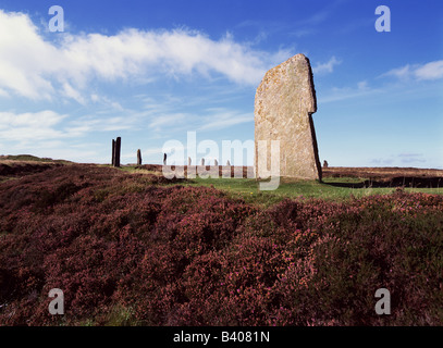 dh  RING OF BRODGAR ORKNEY Neolithic standing stone circle and heather - Stock Photo