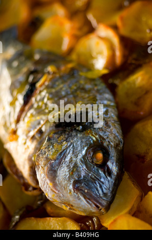 gilthead bream fish roasted in a tray - Stock Photo