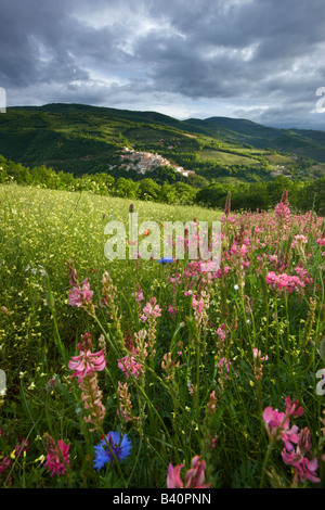 spring flowers growing in a field in the Valnerina with Preci beyond,Monti Sibillini National Park, Umbria, Italy - Stock Photo