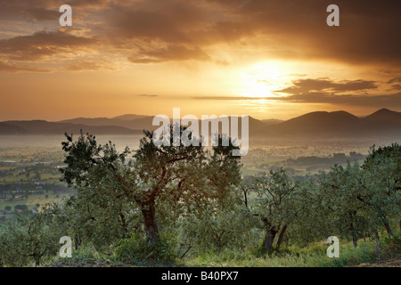 an olive grove overlooking Bevagna and the Val di Spoleto at dawn, Umbria, Italy - Stock Photo