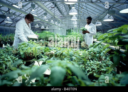 Scientists working in the greenhouse at a research and development facility for a chemical company that produces - Stock Photo