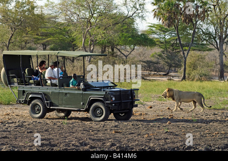 Male lion walking past tourists sitting in safari vehicle, Selous Game Reserve, Tanzania - Stock Photo