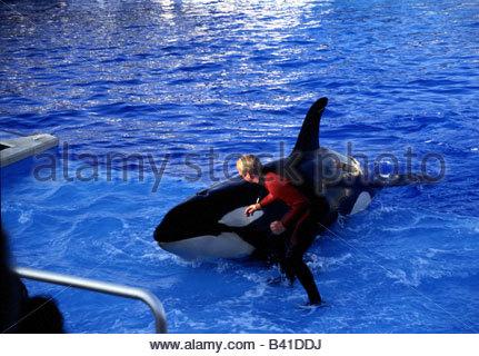 Shamu Killer Whale Show At San Antonio Seaworld Texas