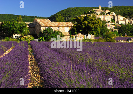 The village of Banon on a hill above fields of blossoming Lavender in the heart of the Provence region, Banon, Provence, - Stock Photo