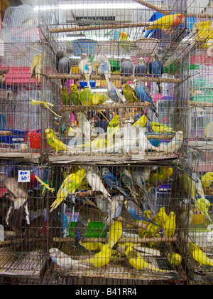 Caged birds for sale in the animal department of Bangkok's famous Chatuchak weekend market - Stock Photo