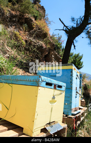 A beekeepers Langstroth type hives on palettes in the mountains behind Sougia south western Crete Greece - Stock Photo