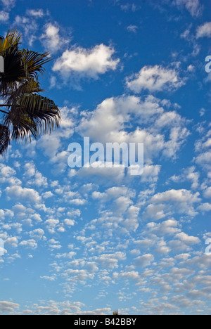 Developing cumulus Clouds, Palm Trees, Blue Sky, Nobody, no one Howard Hughes Center los Angeles California, USA - Stock Photo