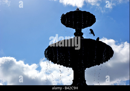 Silhouette Of Birds On A Water Fountain In Brooklyn New York