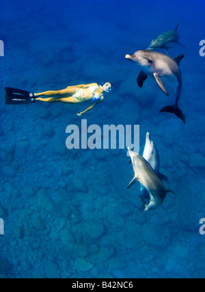 Indo Pacific Bottlenose Dolphins and Freediver Tursiops aduncus Mukojima Group Ogasawara Islands Pacific Ocean Japan - Stock Photo