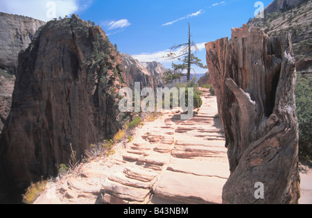 Utah, Zion National park. A view from the climb to 'Angels Landing' cliff - one of the most spectacular hikes in - Stock Photo