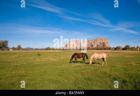 Two ranch horses graze in a pasture on a small ranch near Smith Rock State Park in Terrebonne Oregon - Stock Photo